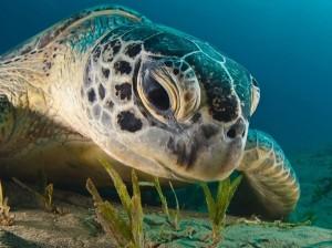 5422055-R3L8T8D-600-green-turtle